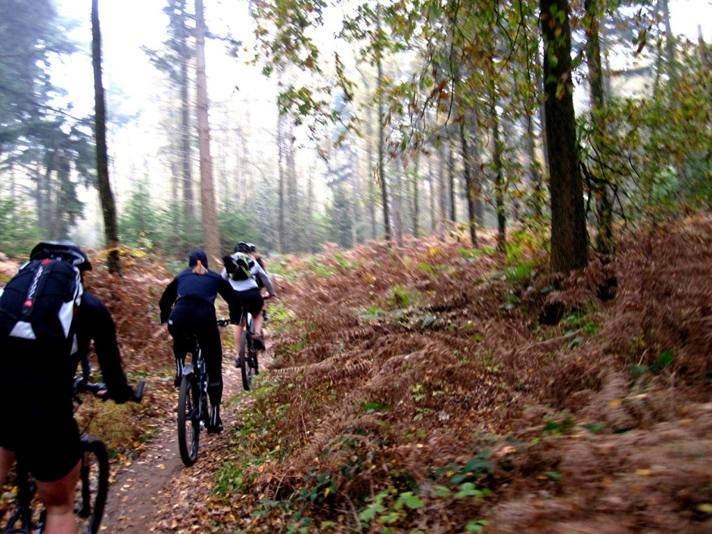 MTB in bossen bij Leuven